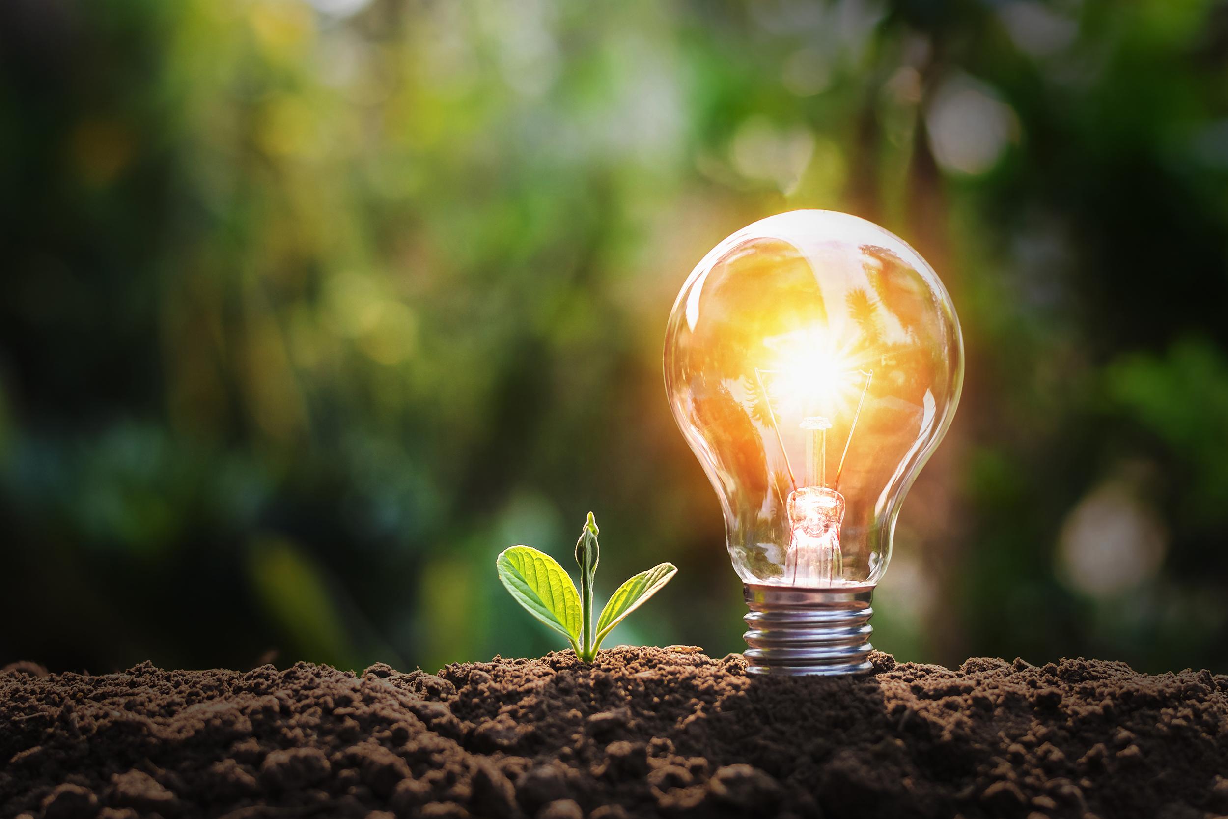ampoule_planté_dans_la_terre_et_petite_pousse_createur_maison_ecologique